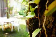 http://www.babylonbangkok.com/common/php/timthumb.php?src=http://www.babylonbangkok.com/common/photo/galleries/galleries-gardens-08.jpg&w=1200&h=700&q=100